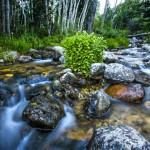 A creek in Great Basin National Park as seen on June 15, 2013