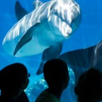 MIRAGE DOLPHINS 001