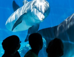 Students from Joseph E. Thiriot Elementary School view dolphins at Siegfried & Roy's Secret Garden & Dolphin Habitat, Friday, May 29, 2015, at The Mirage, 3400 South Las Vegas Boulevard. U.S. Rep. Dina Titus, D-Nev honored the habit and the students a Congressional Recognition in their efforts for creating artwork, essays and poems for World Wildlife Day and Endangered Species Day.(Jeff Scheid/Las Vegas Review-Journal) Follow Jeff Scheid on Twitter @jlscheid